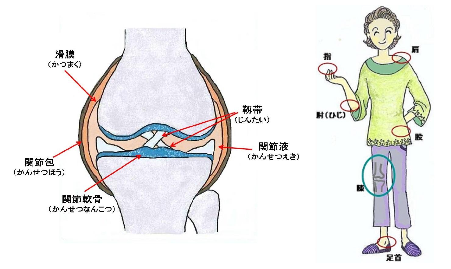 生理 的 機能 と は 1 身体の老化・機能障害と生理機能